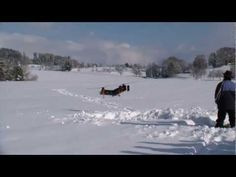 Touch and Go. Polar Bear, Switzerland, Action, Meet, Touch, Youtube, Group Action, Youtubers, Polar Bears