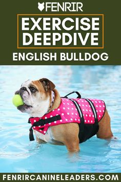 Exercising your dog no matter the breed is very important and today you can learn the requirements of a English Bulldog. French Bulldog Breed, Bulldog Breeds, Best Dog Breeds, Best Dogs, The Perfect Dog, Medium Sized Dogs, Dog Behavior, Family Kids, Dog Care