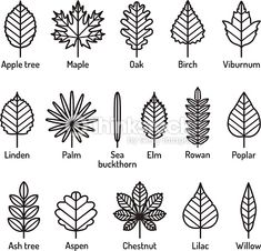 Leaves types with names icons vector set. Outline black icons. Nature design elements.