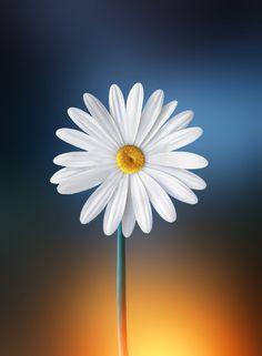 Hermosa flor