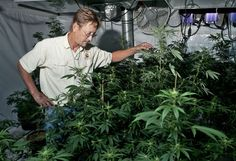 "Grand Rapids, MI: Medical marijuana dispensary owner Dave Overholt likes to say, ""It's healing, not dealing."" That's his boiled-down view of the medical marijuana dispensary he owns. Registered medical marijuana patients can go w registered caregivers to get small amts of marijuana for $10/gram. The police raided him in March; he's headed to trial despite his keeping within the policy's of the state's medical MJ law voters approved in 2008. He's hopeful a jury will see things differently."