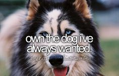 Yes...if only I could figure out just one dog...Alaskan Malamute, German Sheppard, American Eskimo, Small size Beagle, Golden retriever, Australian cattle dog, etc. etc etc....lol