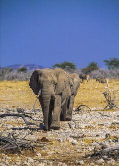 To buy this picture please visit www.3aART.de Zum Erwerb dieses Bildes besuchen sie bitte unsere Hompage www.3aART.de