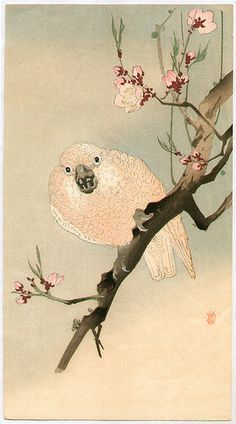 1910's - Koson, Ohara - Parrot and Plum
