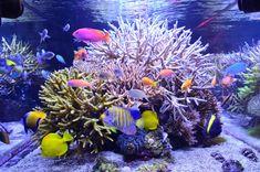 Adee's sunlit Reef #Aquarium now supplemented with three 100 watt Orphek DIF100XP LEDs. Nice!