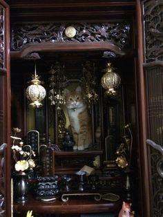 """小出和彦 在 Twitter:""""家に帰って仏壇を見たら大変なことになっていた https://t.co/LX4XPzeRgz"""""""