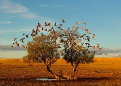 Christian Spencer, Tree of life. National Geographic Photo Contest  #cult #photography #photo #pic #nationalgeographic #cultstories
