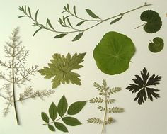 leaves by Camilla Engman, via Flickr