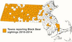 map of towns with reports of Black Bear sightings My Town, Black Bear, Mammals, Wildlife, Map, American Black Bear, Location Map, Maps