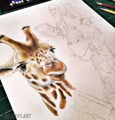 "Starting in on a pair of Giraffes. This one is going to be fun!  My Coloring Book, ""Intricate Ink Animals In Detail"" is available here: http://www.pomegranate.com/cbk002.html  Prints of my work are available here: https://www.etsy.com/shop/TimJeffsArt  #giraffe #giraffes #animalart #spots giraffelovers#zoo #coloredpencil"