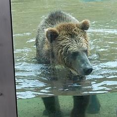 Bear Country at San Francisco Zoo San Francisco, CA #Kids #Events