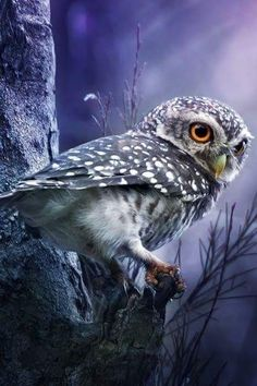 ⊙_⊙corujas - Spotted Owlet by Sasi - smit on Beautiful Owl, Animals Beautiful, Cute Animals, Owl Photos, Owl Pictures, Owl Bird, Tier Fotos, Pretty Birds, Cute Owl