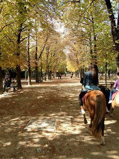 Ponies Jardin des Luxembourg
