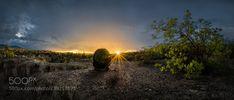 Biznaga Sundown (Luis Lyons / Tehuacán / México) #NIKON D810 #landscape #photo #nature