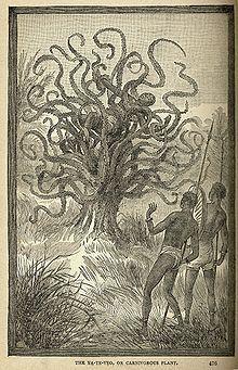 Plante carnivore - Un Homme dévoré par une plante carnivore, illustration de J.W. Buel, 1887.