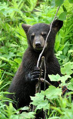 Baby Bear bt Robert Fry**