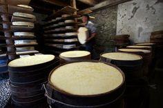 Bitto #valtellina  Lasciatevi catturare dal gusto imperdibile dei formaggi della Valtellina: dagli alpeggi, dove gli animali pascolano liberi, nascono prodotti unici come il Bitto, il Casera e lo Scimudin, tutti a marchio DOP.