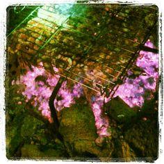 Gambitas a la Brasa ..... Sant Juan & Campiri!!!! http://instagr.am/p/MOykRxR8M4/