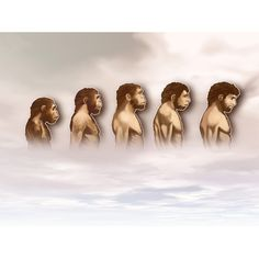 #rothzroom I used this picture of evolution to show how zach matured throughout the book, and learned more about himself.