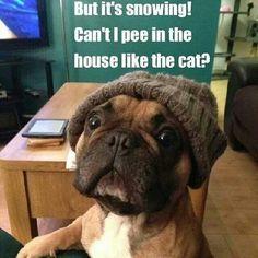 Potty Habits - Dog vs Cat