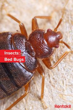 To Kill Bed Bugs: Vinegar And Baking Soda To Kill Bed Bugs