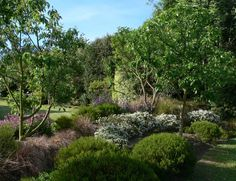 good example of low NZ plants with a few trees (Garden View Garden)