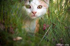 Photo prise par Frédéric Dupont - Le meilleur de la communauté : les plus belles photos de chats - Géo