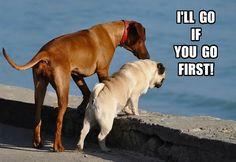 67 Best Dog Memes images | Dog memes, Funny dogs, Funny ...