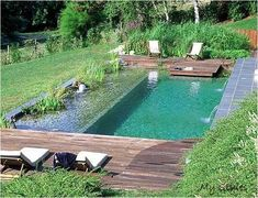 Beautiful Natural Swimming Pools Add More Luxury Without Chemicals piscina natural Swimming Pool Pond, Natural Swimming Ponds, Swiming Pool, Natural Pond, Swimming Pool Designs, Indoor Swimming, Natural Backyard Pools, Agua Natural, Natural Landscaping