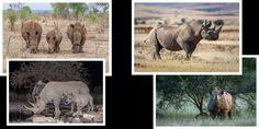 Rhino Blog