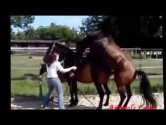Apareamiento Horse animales de apareamiento videos locos vídeo divertido...
