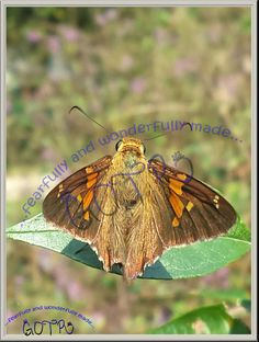 "Art Butterfly Brown Orange Moth 8x10 Glossy Photo Only ""Just Chillin' "" #12"