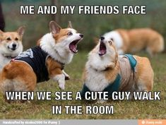 At least inside our heads, but yeah, pretty much Animal Jokes, Funny Animal Memes, Funny Animal Pictures, Funny Photos, Funny Dogs, Funny Animals, Cute Animals, Funny Memes, Dog Memes