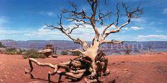 12x24 Fine Art Panoramic  Grand Canyon by JasonSpeerPhoto on Etsy, $40.00