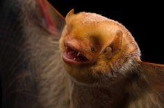16 zdjęć, które sprawią, że polubisz nietoperze