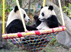 Baby and Mama pandas <3