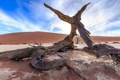 Dead Treeangles - Dead trees in twisted shapes acts as cursed monuments over a once-thriving forest that centuries ago turned into a white clay pan now bearing the name Deadvlei, deep inside the Namib-Naukluft Park in Namibia.