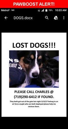 Please spread the word! Prada & Gucci was last seen in Colorado Springs, CO 80917.    Nearest Address: Charter drive, Colorado springs CO