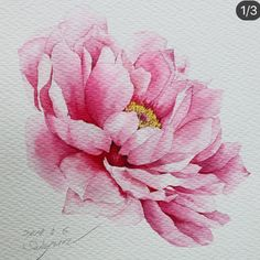 🎗Today is a gift! Peony Drawing, Peony Painting, Watercolor Painting Techniques, Watercolour Painting, Watercolor Flowers, Watercolours, Botanical Drawings, Botanical Art, Watercolor Illustration
