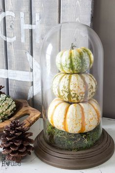 DIY Pumpkin Terrarium from a Thrifted Dome Clock | Bless'er House Get the details for how I turned this dusty, broken clock into a DIY pumpkin terrarium.  #pumpkin #falldecor