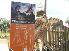 Signage, Giraffe, Architecture, Arquitetura, Felt Giraffe, Billboard, Giraffes, Architecture Design, Signs