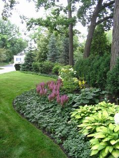 [low maintenance plants - The background is Spruce and Arborvitae. The middle layer is Viburnum, Hydrangea and Ligularia. The foreground is Astilbe, Hosta and Pachysandra.] ... Great ideas for the Shade Garden
