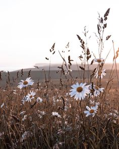 the one with the daisies. My favourite field is on the turn again, the grass is almost golden and the flowers are moving through their… Flower Aesthetic, Aesthetic Photo, Of Wallpaper, Iphone Wallpaper, Imagen Natural, Brown Aesthetic, Summer Aesthetic, Wall Collage, Aesthetic Wallpapers