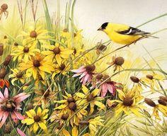 Pájaros 13