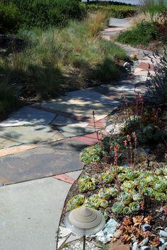 sustainable low water garden design in san jose california taproot garden design fine gardening curbside strip pinterest gardens