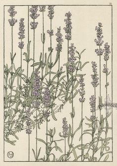 «Decorative Plant and Flower Studies: For the Use of Artists, Designers, Students and Others»    Декоративные растения и цветы    Автор: ...