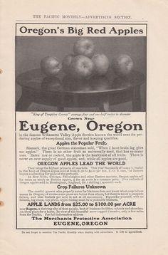 1907 Merchants Protective Association Eugene OR Ad: Oregon's Big Red Apples #MerchantsProtectiveAssociation