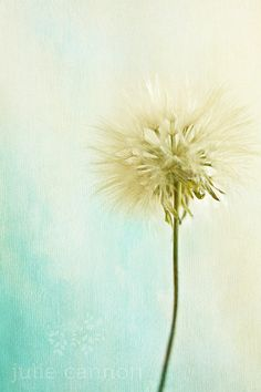 beautiful dream, a dandelion on a fine day, this fine photography print will have you smiling. Dandelion Photography  Blue and Green Art  by JCannonPhotography, $35.00