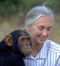 Jane Goodall, born April 3, 1934, was a pioneering English primatologist (a person who studies primates, which is a group of animals that includes human beings, apes, monkeys, and others). Her methods of studying animals in the wild, which emphasized patient observation over long periods of time of both social groups and individual animals, changed not only how chimpanzees (a kind of ape) as a species are understood, but also how studies of many different kinds of animals are carried out.