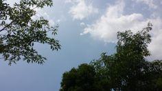 scenery, sky, trees